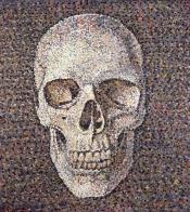 Skull- large phosflourescent